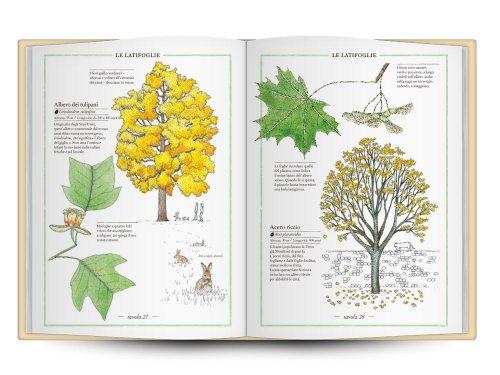 libro-elegante-albi-illustrati-radice-labirinto (59)